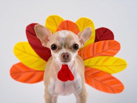 Mexican Miniature Turkey (Photo via Pinterest)
