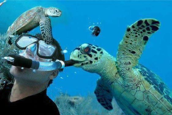 Sea Turtle Surprise (Image via OMG Facts)