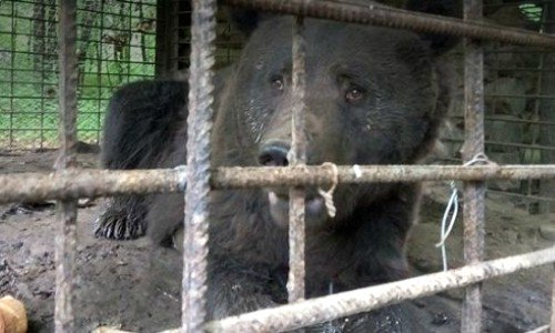 bear baiting bans