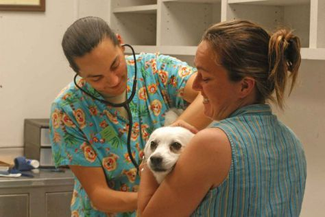 Veterinarian Treating a Dog (Public Domain Image)
