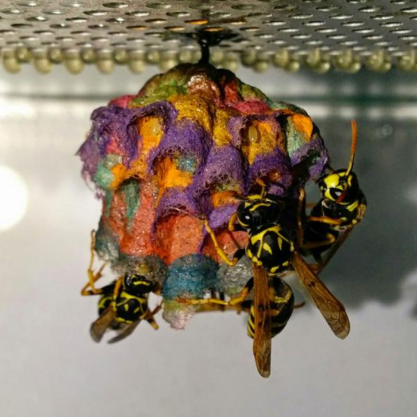 Wasps And Technicolor Dream Homes