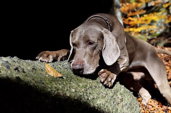 Training dogs to sniff out pests