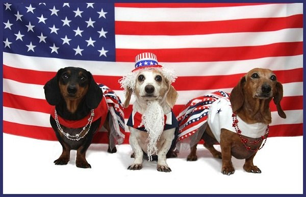 Don't Make It A Big Bang For Your Pets This Fourth