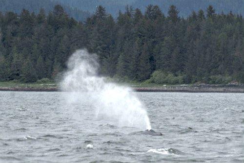 Whale Blow Hole: Marine mammals capable of having feelings