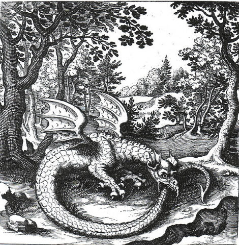 Etching of a Wyvern by Lucas Jennis (1590-1630) (Public Domain Image)