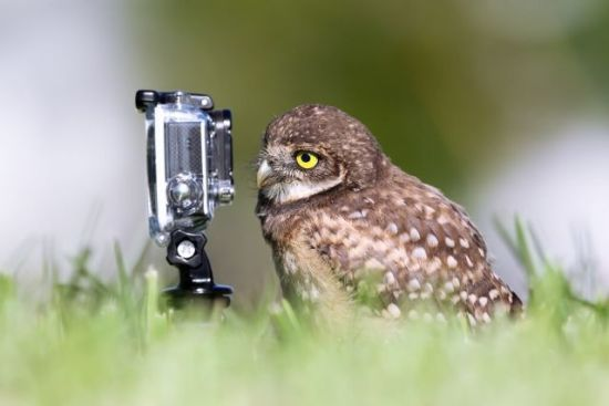 Borrowing Owl: Megan Lorenz, Photographer