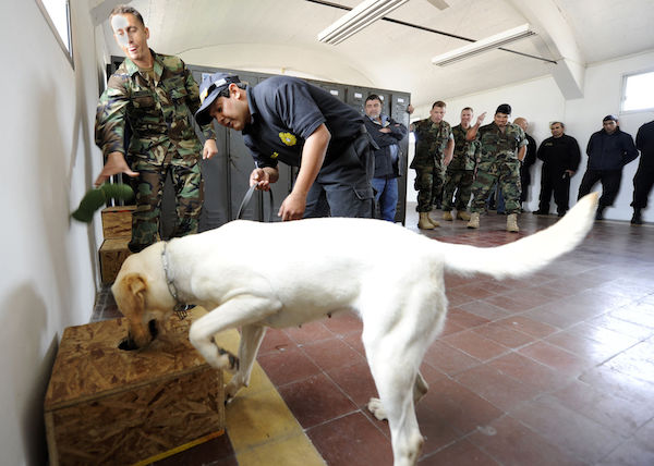 Navy dog detects drugs in test for her skills (Wikipedia)