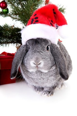 Some Bunny Loves Christmas (Image via A Cute a Day)