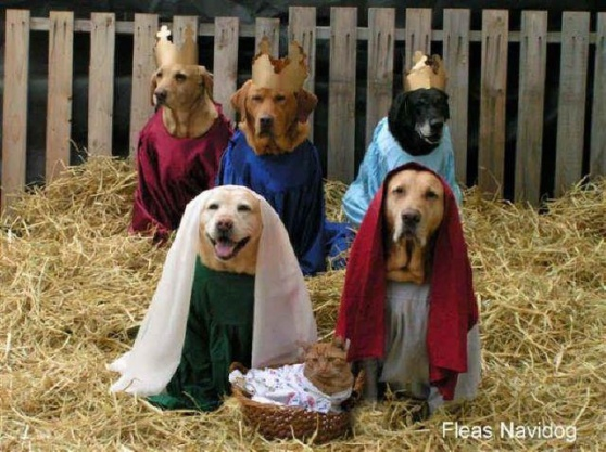 Fleas Navidad! (Image via Gift for Mom)