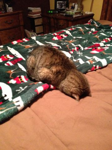 Catmas Exhaustion Sets In (Image via Imgur)
