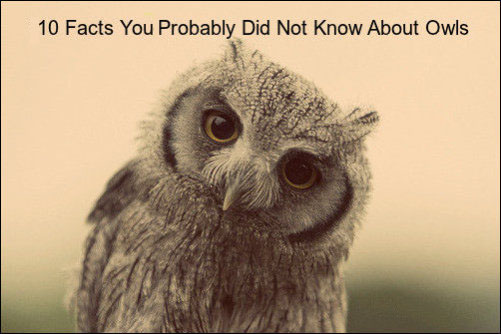 10 Facts You Probably Did Not Know About Owls