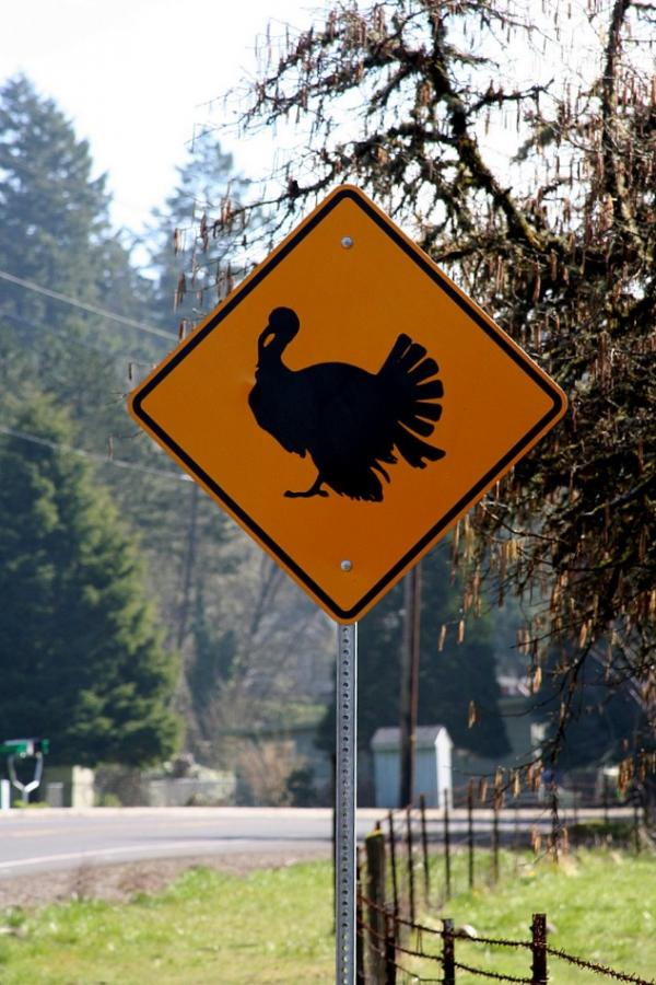 Weird Turkey Road Crossing Sign