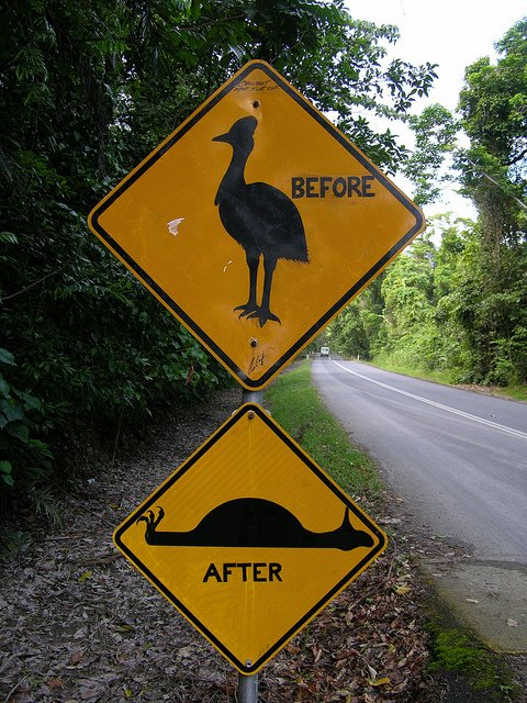 Weird Cassowary Road Crossing Sign