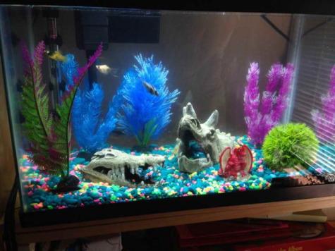 Aquatic pets six tips for novice fish caretakers for 20 gallon fish tank decoration ideas