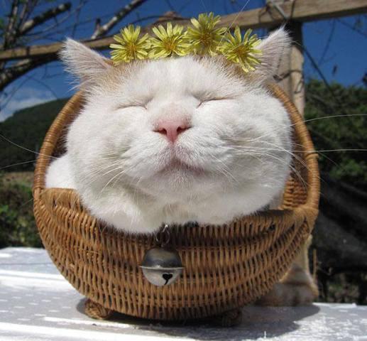 Zen Cat (Image via Huffington Post)