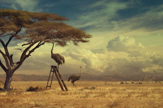 Ostrich Art by Brown: Can't fly? No problem for these birds!