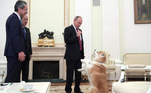 Japanese Akita Puppy Given To Russian President Putin