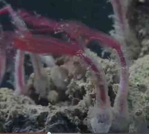 Zombie Worms (You Tube Image)