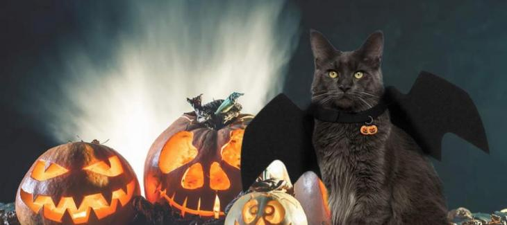Legendog Bat Wings Halloween Pet Costume