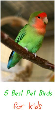5 Best Pet Birds For Kids | Petslady com