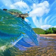 Surfin' Turtle