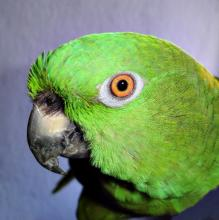 Pet Bird Care: Keeping Your Feathered Friends Happy