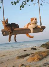 Swinging Cats