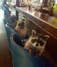 Bar Buddies