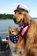 Boat Dogs