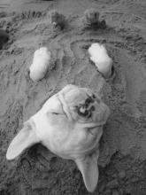 Beach-Buried Dog