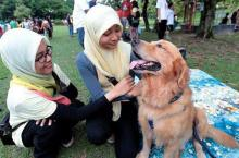"The ""I Want to Touch a Dog"" Event in Malaysia"