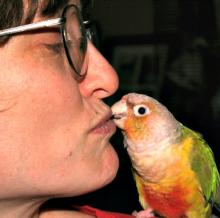 Bird Kisses are Better than Bird Biting