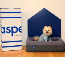Casper Bedding now makes dog mattresses