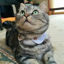 Fashion Cat Collars Give Your Feline Formal Flair