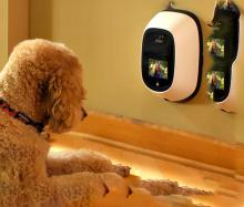 PetChatz Pet Communication System