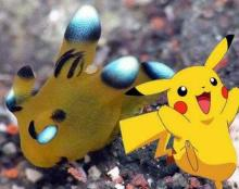 Pikachu Sea Slug: A Pokémon You Can Really Poke