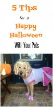 Safe Happy Halloween With Pets