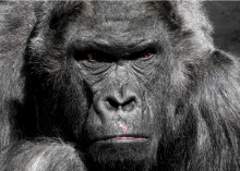 Are Zoos & Animal Captivity Outdated Paradigms?