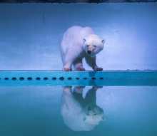 Chinese Mall Zoos & Aquariums Take Animal Captivity To New Depths
