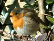 Attracting Birds & Other Wildlife to Your Yard
