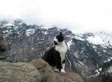 Swiss Alps Guide Cat