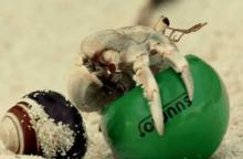 Hermit Crab Housing Crisis Solved By Japanese Real Estate Company