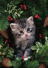 Holiday Kitten