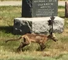 Creepy Creature Caught Cantering 'Cross Cemetery