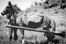 Sergeant Reckless At Work