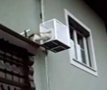 "Homemade ""Cat-Lift"" Pet Elevator Carries Cute Calico Kitty In Style"