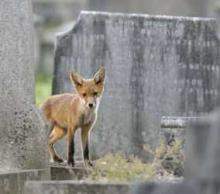 Wildlife Meets Afterlife: The Top Ten Wild Animals In Cemeteries