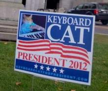 Vote For Meow: The Top Ten Cat Election Candidates