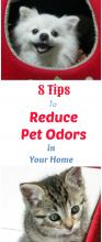 Reducing Pet Odor Tips