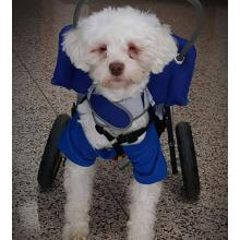 Brave Little Blind Dog Named Noah